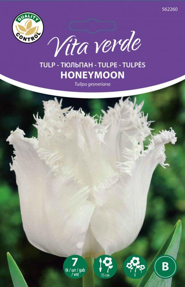 Tulp Honeymoon 7tk