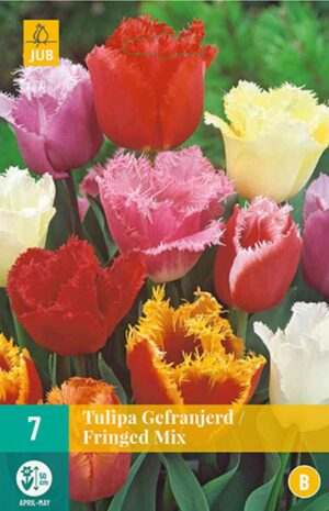 Tulp Fringed Mix 7tk