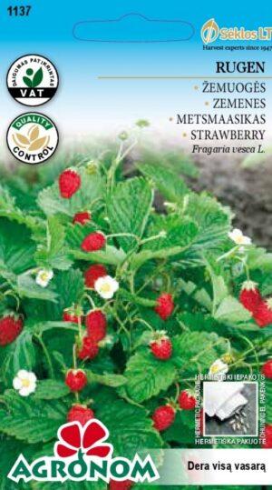 Maasikas Rugen - Fragaria vesca L.