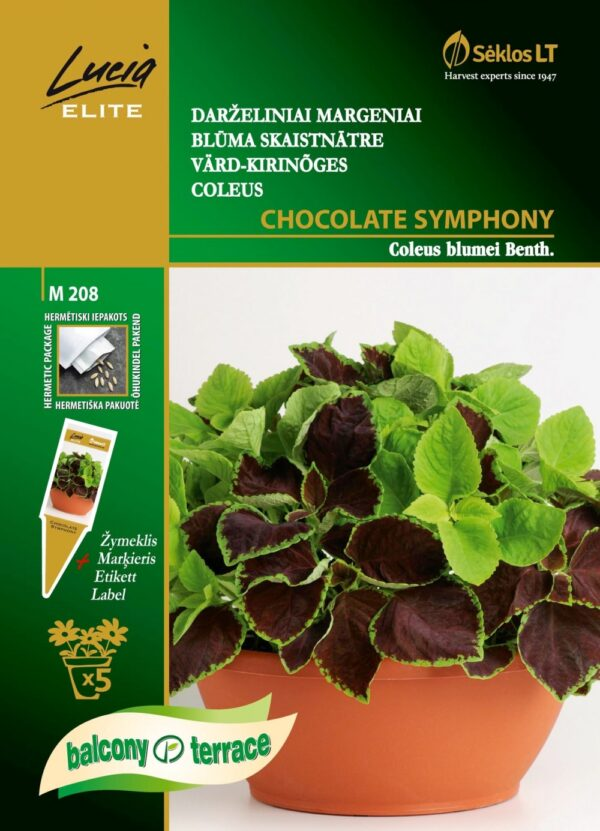 Värd-kirinõges Chocolate Symphony (Claret;green) - Coleus blumei Benth. 5 pilli