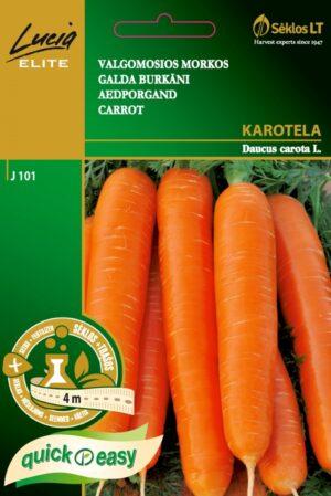 Porgand Karotela lindil - Daucus carota L.