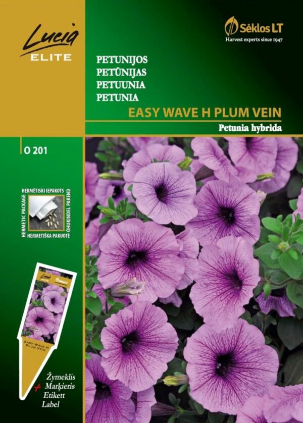 Petuunia Easy Wave H Plum Vein - Petunia hybrida