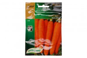 Porgand Amsterdam lindil - Daucus carota L.
