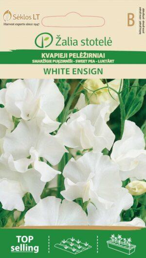 Lõhnav lillhernes White Ensign - Lathyrus odoratus L.
