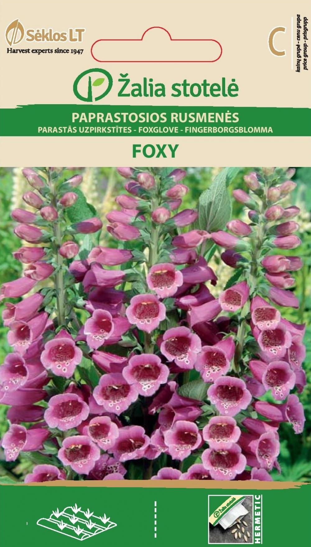 Verev sõrmkübar Foxy segu - Digitalis purpurea