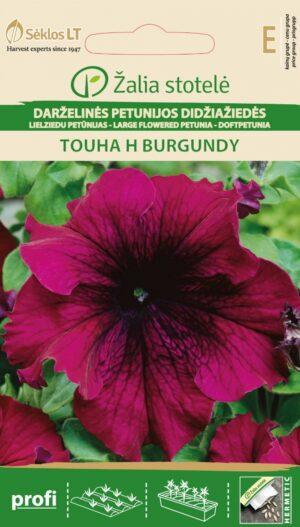 Petuunia Touha H Burgundy - Petunia hybrid a grandiflora