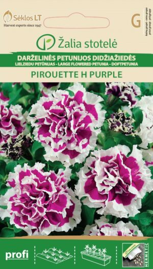 Petuunia Pirouette H Purple - Petunia hybrida grandiflora