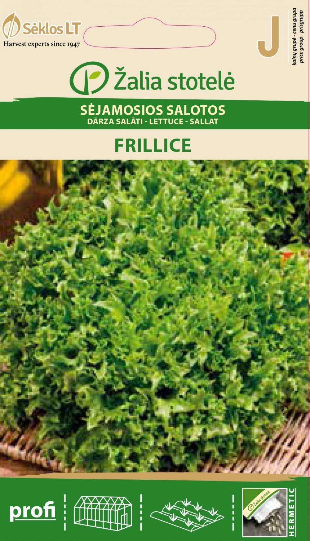 Lehtsalat Frillice 25s Lactuca sativa L.