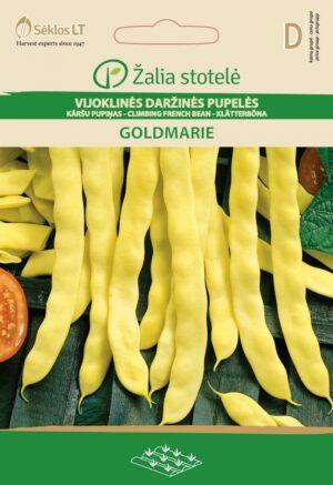 Aeduba Goldmarie - Phaseolus vulgaris L.