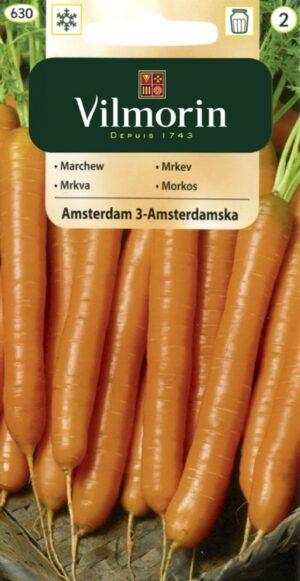 Porgand Amsterdam - Daucus carota