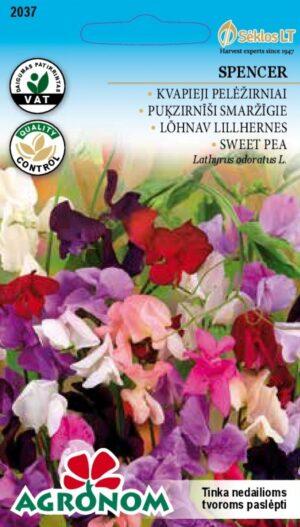 Lõhnav lillhernes Spencer segu - Lathyrus odoratus L.