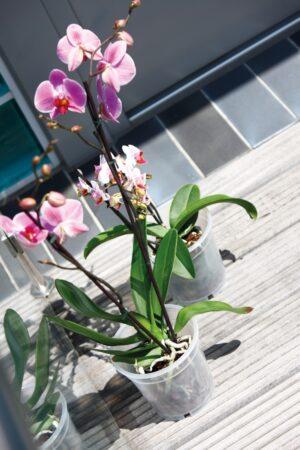 Orhideepott plast 15 x 14;1cm läbipaistev