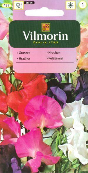 Lillhernes segu - Lathyrus odoratus